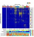 Fig S1(D). DNA methylation clustering of 12 Pan-Cancer tumor types